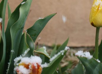 spring in taos cover photo